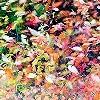 Tapeten: Herbstfarbenrausch 4