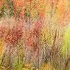 Tapeten: Herbstfarbenrausch 2