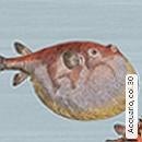 Acquario, col.30