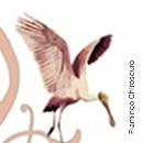 Flamingo Chiroscuro