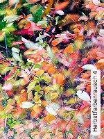 Herbstfarbenrausch 4