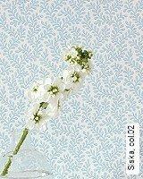 Tapete  - Pastelltöne Siska, 02