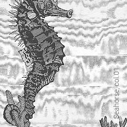 Tapete: Seahorse, col.01