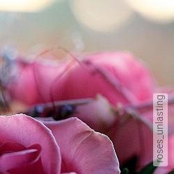 Tapete: roses_unlasting