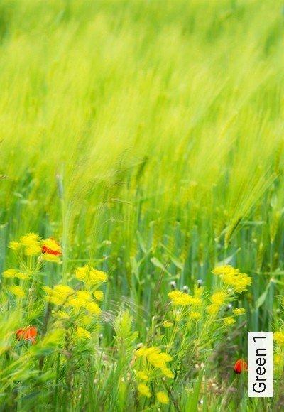 Bild: Tapeten - Green 1