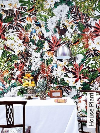Bild: Tapeten - House Plant