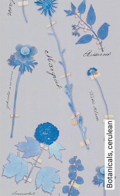 Bild: Tapeten - Botanicals, cerulean