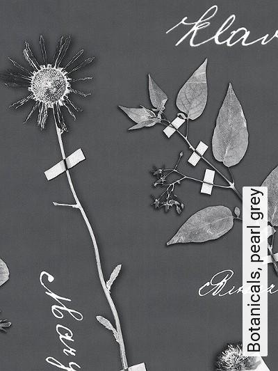 Bild: Tapeten - Botanicals, pearl grey