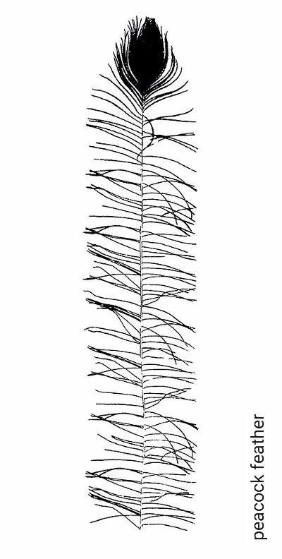 Bild: Tapeten - peacock feather