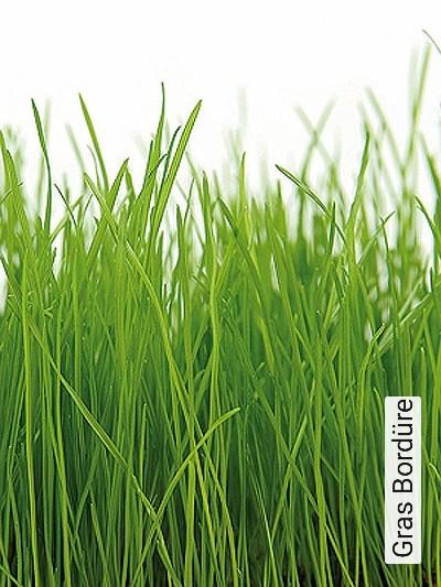 Bild: Tapeten - Gras Bordüre