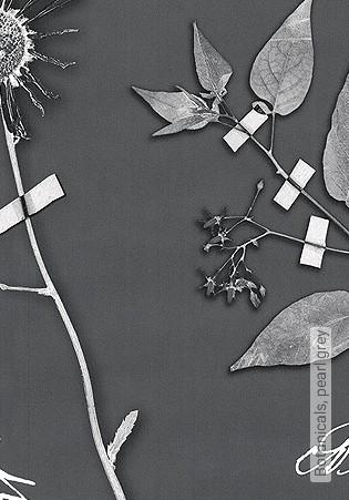 Bild Tapete - Botanicals, pearl grey