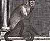 - Procuratie e Scimmie, col.04